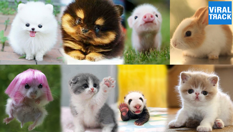 animal babies cute photos