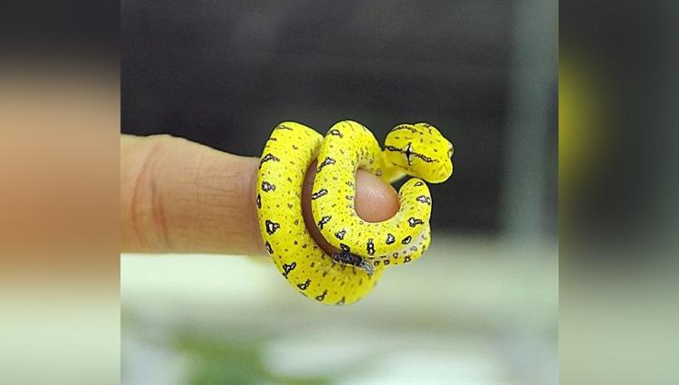 Adorable Snake Pics