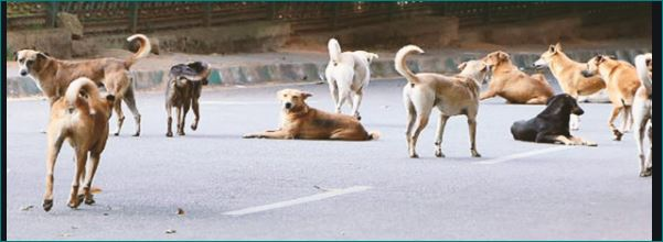 Lockdown Chennai woman eats once a day for dogs