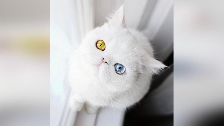meet pam pam the cat