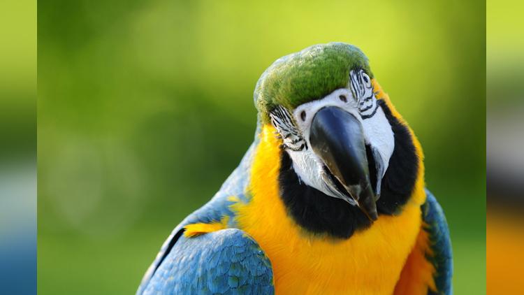 Drug-Addicted parrots