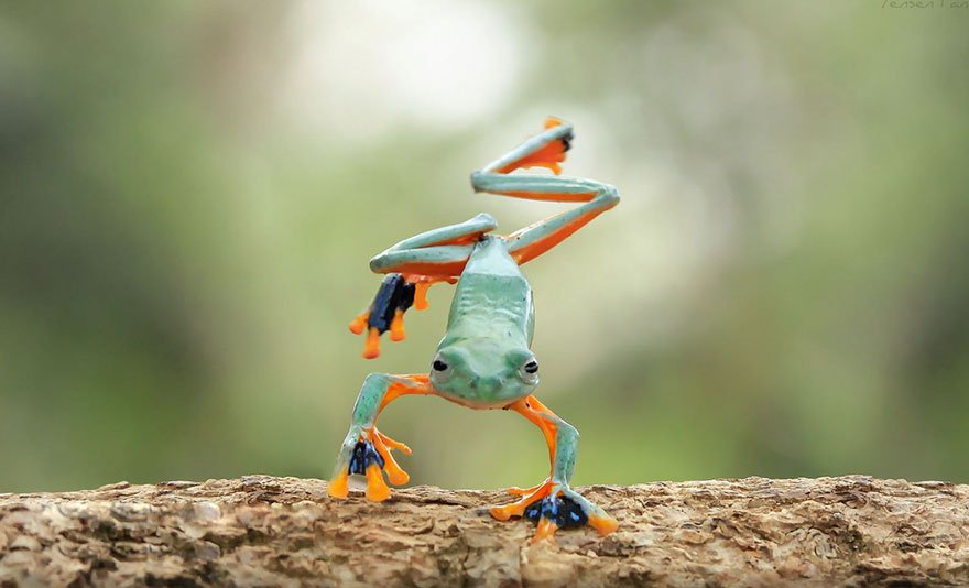 beautiful pictures of frog