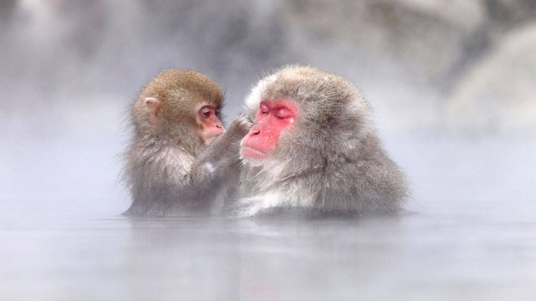 funny mouth of monkeys